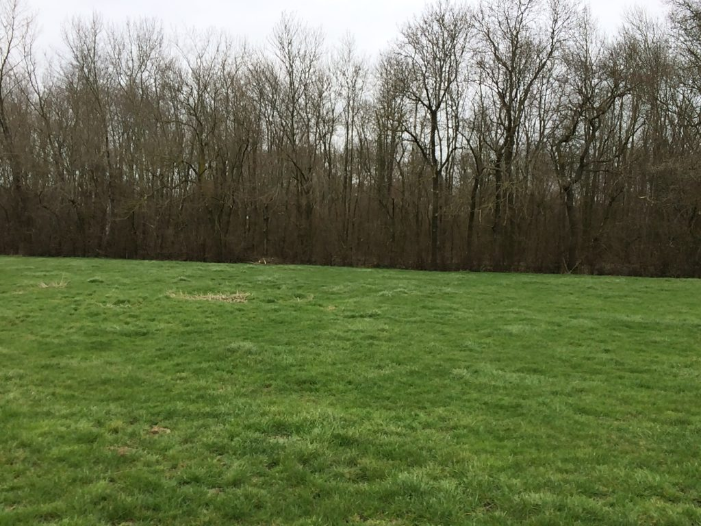 Green field with low grass, bordered by trees. Southwest edge of Montrecourt Wood, France